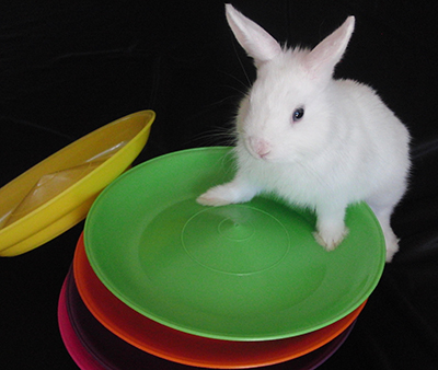 Magic rabbit with spinning plates